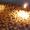 Подращенные утята муларды гусята #1522938