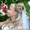 На свадьбу,  юбилей - тамада,  ди-джей,  фотограф,   #164439