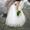 На утренник,  свадьбы,  выпускной,  юбилей-качественное видео+фото в Пензе #1617875