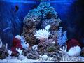 Чистка аквариума Пенза. Обслуживание аквариума Пенза