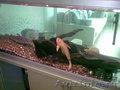 Аквариум 648 л с рыбками