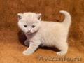 Продаются 5 котят!