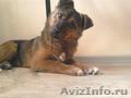 Очаровательный щенок ищет дом!