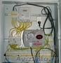 Срочный вызов электрика на дом в Пензе. ИП Шутов А.В.