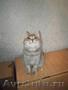 Суперочаровательные котята