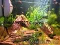 Профессиональное обслуживание аквариумов в Пензе