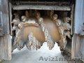 Дорожная гусеничная фреза Wirtgen W100F - Изображение #10, Объявление #1140719