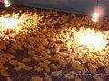 Подращенные утята муларды гусята